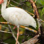 john-heinz-national-wildlife-refuge-at-tinicum